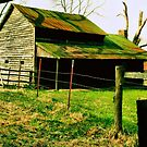 """""""Ol' Mossy Roof""""... prints and products by © Bob Hall"""