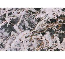 Frosty Needles of Ice Photographic Print