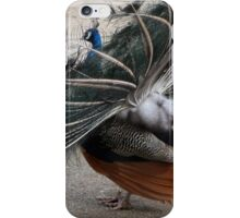 The Mating dance. iPhone Case/Skin
