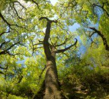 Ness Glen, Mystical Irish Wood Sticker