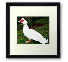Bird Portrait Framed Print