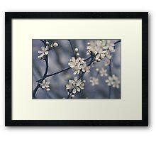 beautiful white cherry flower blossom - cherry tree flower Framed Print