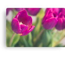 purple tulips macro - beautiful flower closeup Canvas Print