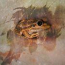 Praying Frog by Julia Harwood