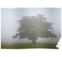 Lost in fog Poster