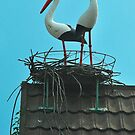 A Nest of Storks by Penny Smith