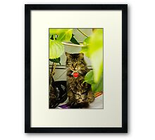 Fluffy Snickers Framed Print