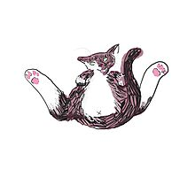 Cat Yoga Photographic Print