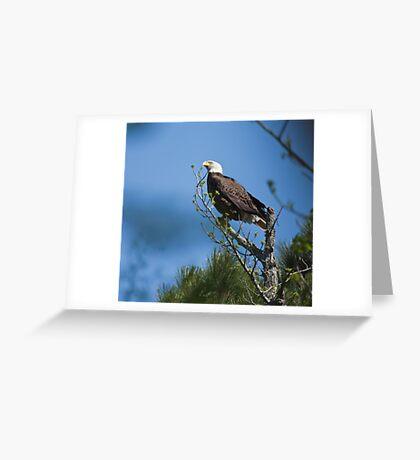 Guard Duty II,   Bald Eagles, Jordan lake, NC Greeting Card
