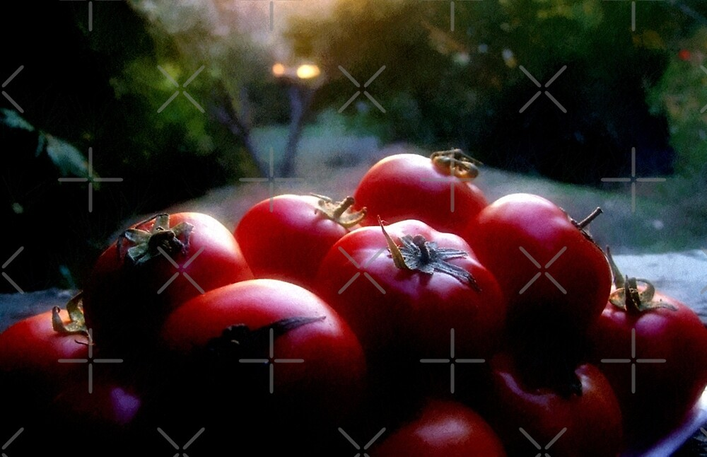 red tomatoes by webgrrl