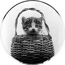 Cat in a Basket Vintage Photo by Silvia Neto