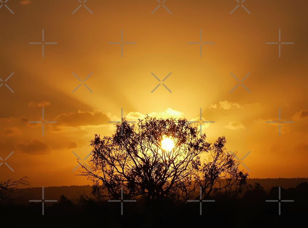 sunday's sunset : 8 OCT 2006 by webgrrl