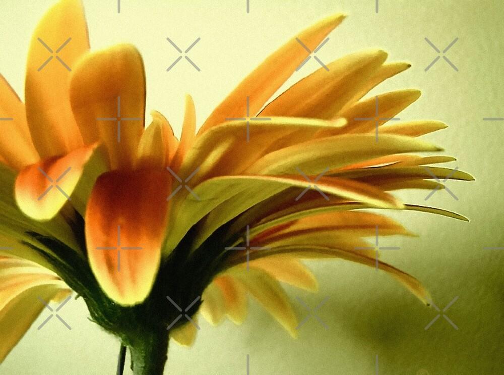 wall flower by webgrrl