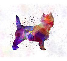 Cairn Terrier in watercolor Photographic Print