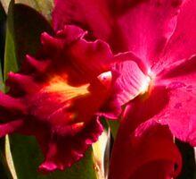 Cattleya Orchid Sticker