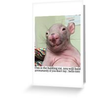 Hello Rato Greeting Card