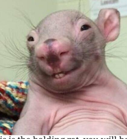 Hello Rato Sticker