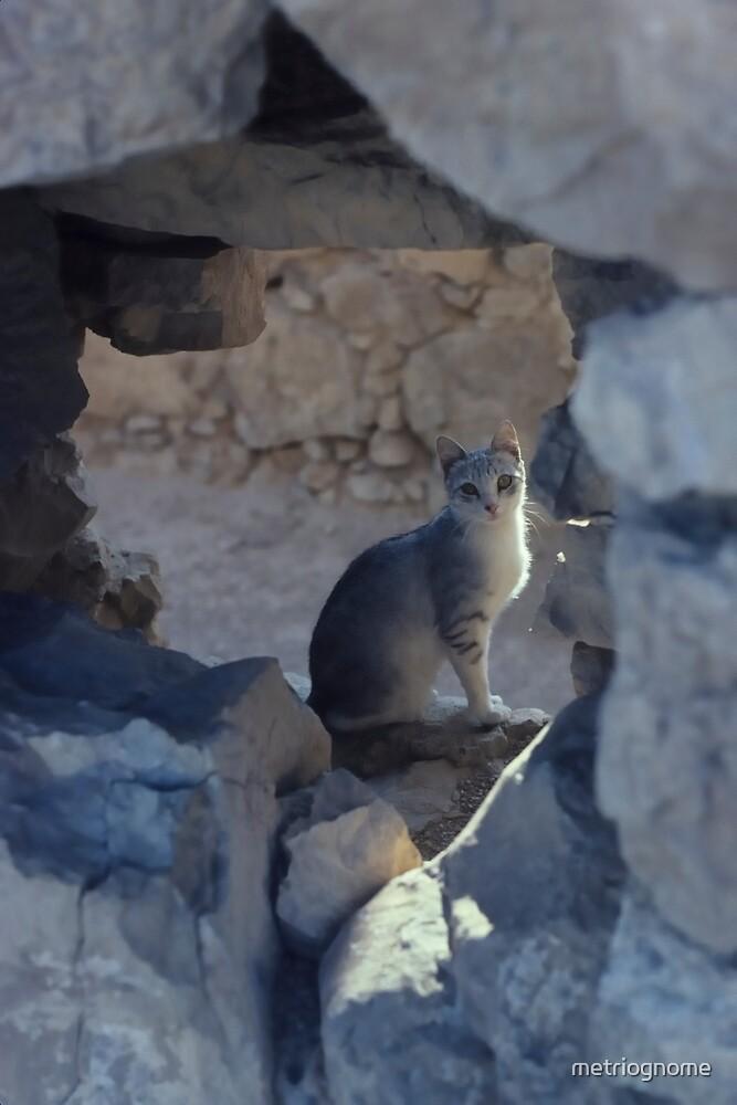cat in ruins by metriognome