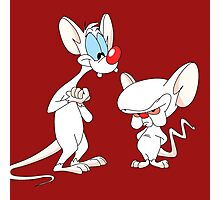 Best Friend Pinky And Brain Photographic Print