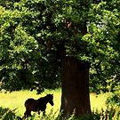 Under the old oak tree by mikebov