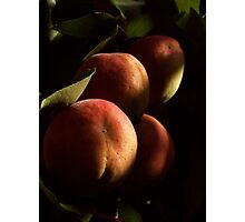 APRICOTS IN MY BACKYARD Photographic Print