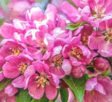 Crabapple blossoms - painted Sticker