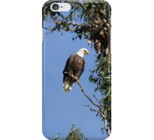 Bald Eagle on a Sunny Day iPhone Case/Skin