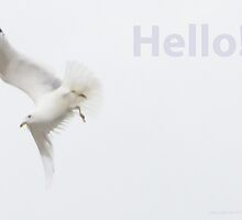 Hello! by Thomas Murphy