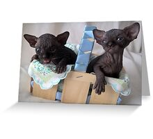Two baby black sphynx cats - devil and angel Greeting Card