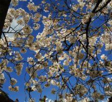 Cherry Blossom - Spring Time Sticker