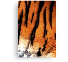 Tiger Fur Canvas Print