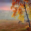 Foggy Country Morning by Igor Zenin
