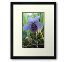 floral flower blue Framed Print