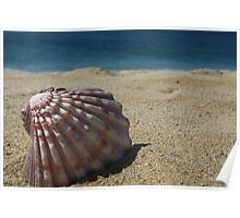 Pink Scallop Shell on the Beach Poster