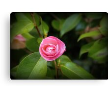 Floating Pink Canvas Print