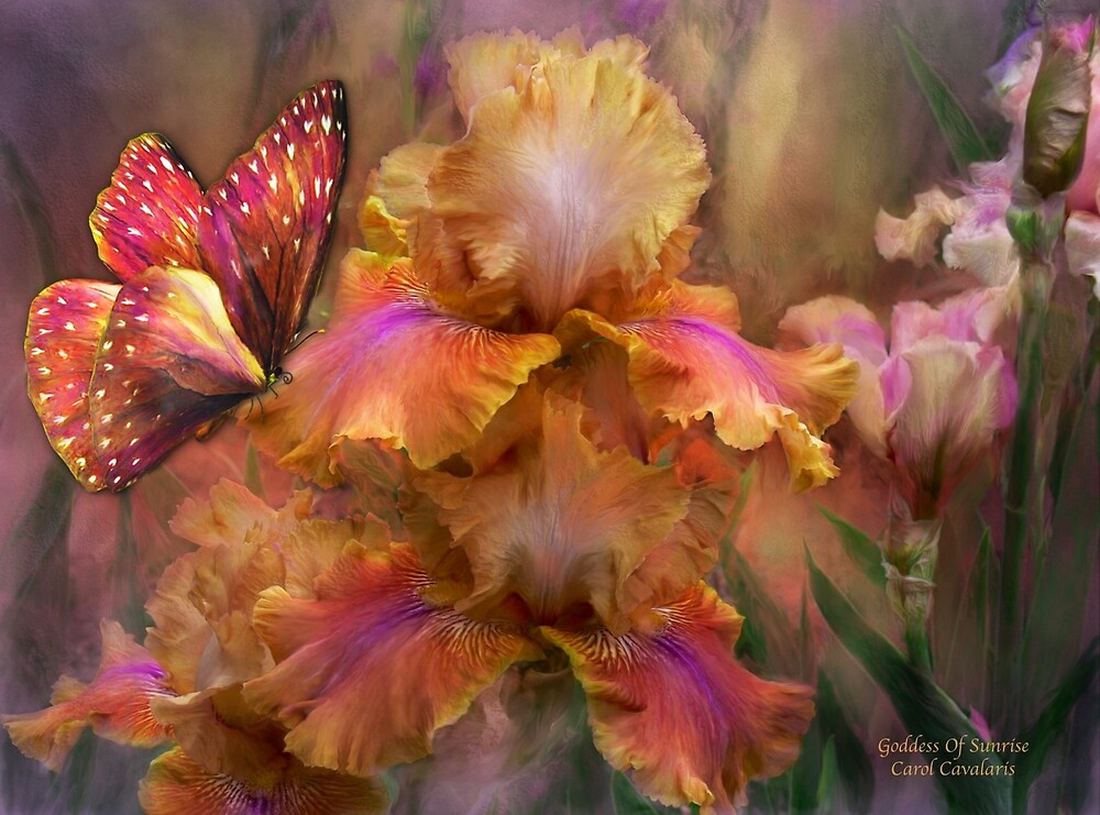 Iris - Goddess Of Sunrise by Carol  Cavalaris