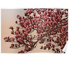 Magnolia Tree In Bloom - Antique Victorian Needlepoint Effect Poster