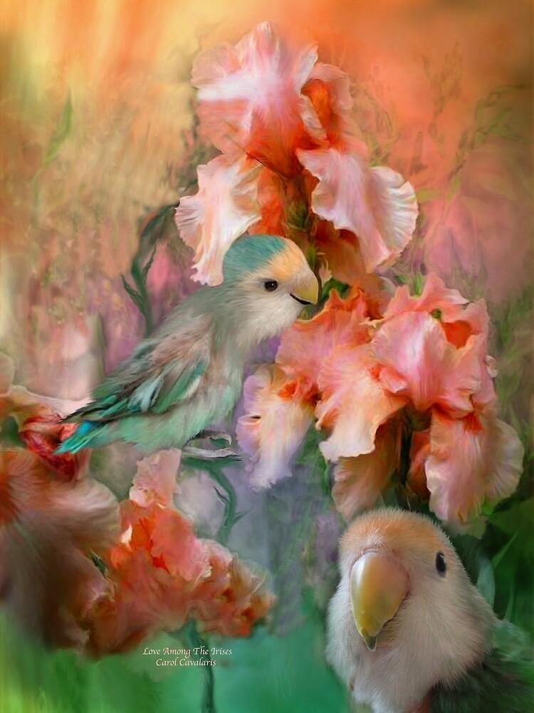 Love Among The Iris by Carol  Cavalaris