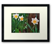 Spring Trio Framed Print