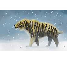 Saber-toothed tiger Photographic Print