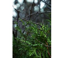 Green Tree Branches Photographic Print