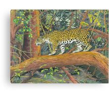 Jaguar Brazil Canvas Print