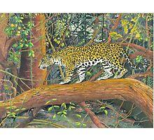 Jaguar Brazil Photographic Print