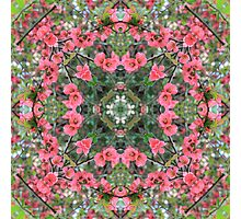 Nature Mandala VI Photographic Print