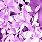 Cascading orchids - Mauve by PhotosByHealy