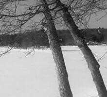 Winter Pond Sticker