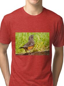 Spotted Towhee Looking Up Tri-blend T-Shirt