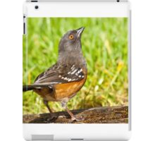 Spotted Towhee Looking Up iPad Case/Skin