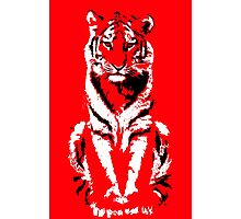Tranquil Tiger Photographic Print