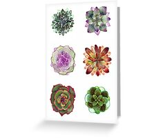 Succulents | Plants - Watercolor Greeting Card